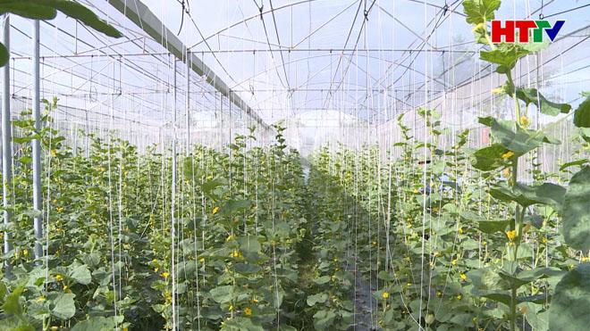 Dưa lưới trồng trong nhà màng