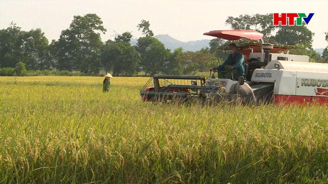 Chủ tịch UBND tỉnh kiểm tra tiến độ thu hoạch lúa và tình hình dịch bệnh tại Can Lộc và Đức Thọ